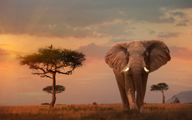 photo of an elephant in Africa